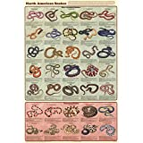 Laminated North American Snakes Educational Science Chart Poster Laminated Poster 24 X 36in