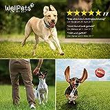 Premium Hundeball 2 Stück | Hundespielzeug Ball aus Naturkautschuk mit Zahnpflege Funktion - 2