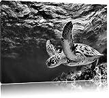 Monocrome, Schildkröte im Riff , Format: 80x60 auf Leinwand, XXL riesige Bilder fertig gerahmt mit Keilrahmen, Kunstdruck auf Wandbild mit Rahmen, günstiger als Gemälde oder Ölbild, kein Poster oder Plakat