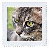 3dRose QS 46676_ 3langhaarigen gestromt cat-Animal,