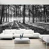 murando - Vlies Fototapete 500x280 cm - Größe Format XXL- Vlies Tapete - Moderne Wanddeko - Design Tapete - Wald Natur Landschaft Bäume c-B-0127-x-c