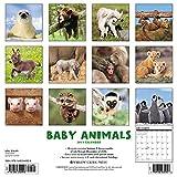 Image de Baby Animals 2017 Calendar