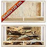 Repiterra Terrarium en bois pour reptiles - facile à monter - Aeration sur la face avant - 120x60x60cm - En bois OSB