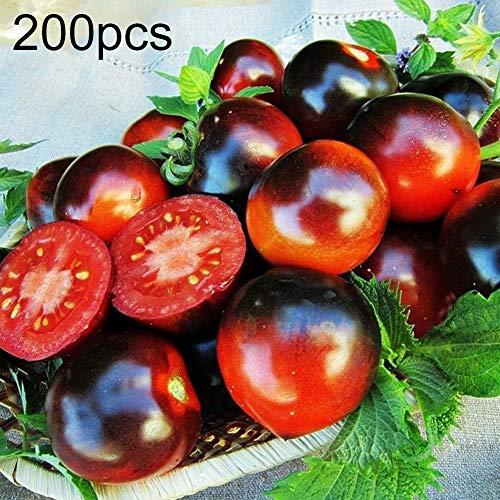 Seltene Tomatensamen, KimcHisxXv 200Pcs Seeds Delicious Obst Gem¨¹se Home Garden Decor - Seltene Tomatensamen -