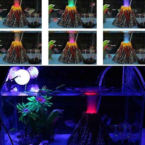 Zoom IMG-1 runfon corallo per acquario pianta