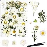 Sweieoni Fleurs Pressées Séchées 37 Pièces Fleurs de Marguerite Naturelles Fleurs Séchées Pressé Fleurs Séchées Fleur Sèche F