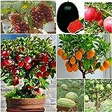 #4: Shop 360 Suitable Fruit Seeds - Grapes, Apple, Pomegranate, Orange, Guava, Watermelon 5 Seeds Each