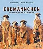 Erdmännchen: Auf Wachtposten in der Wüste