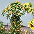 Pötschke Ambiente Rankschirm Monet von Pötschke Ambiente bei Du und dein Garten
