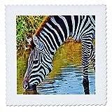 3drose Zebra. African Wildlife. Zoo. Cool Bild.–Quilt