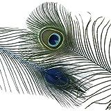"ZUCKER Dark Turquoise Stem Dyed Peacock Feather 8 15"" Art Supply DIY Craft Wedding Decor 25pcs"