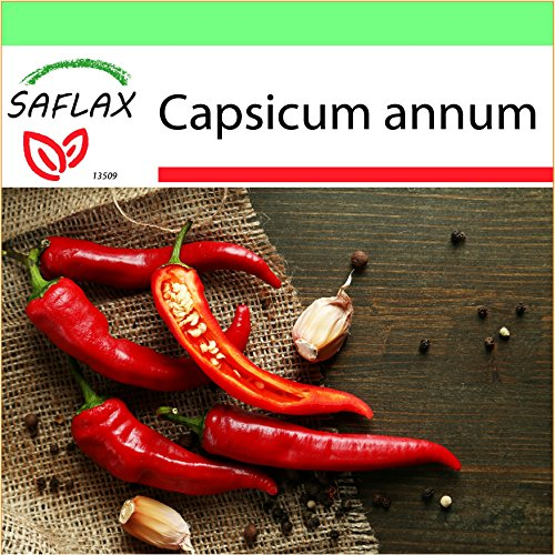 Galleria fotografica SAFLAX - Garden to Go - Peperoncino di Cayenna - 20 semi - Capsicum annum