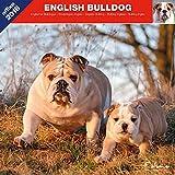ENGLISCHER BULLDOGGE 2018 - KALENDER AFFIX (ENGLISH BULLDOG)
