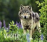 times&more Wölfe Bildkalender - Kalender 2019