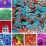 Yukio Samenhaus - Selten Bunt Wilder Wein (Parthenocissus tricuspidata) Jungfernrebe, Schnellwachsend Kletterpflanze frosthart bis 10 m für Zäune, Mauern und Häuser