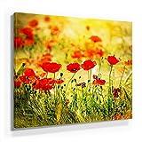 Mohnblumen Bild A480, 1 Teil 80x80cm Leinwand auf Holzrahmen aufgespannt, FineArt Print, UV-stabil und wasserfest, Kunstdruck für Büro oder Wohnzimmer, Deko Bild