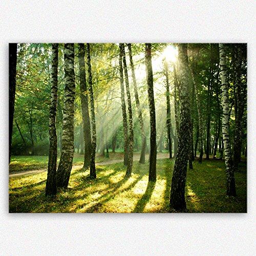 !!! SENSATIONSPREIS !!! ge Bildet hochwertiges Leinwandbild Pflanzen Bilder - Wald - natur blumen Wald Sonnenschein grün - 30 x 20 cm einteilig   angebote der woche geschenke für frauen geschenke für männer   2206 J