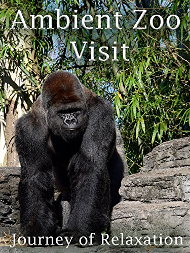 Ambient Zoo Visit