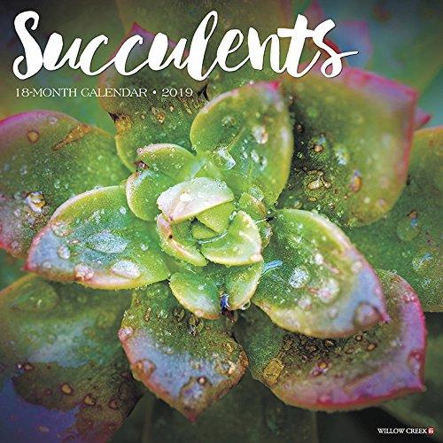 Succulents 2019 Wall Calendar -