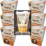 6x Fruchtfliegen-Lebendfalle Trapango®, (6er-Pack)