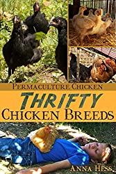 Thrifty Chicken Breeds: Efficient Producers of Eggs and Meat on the Homestead (Permaculture Chicken Book 3) (English Edition)