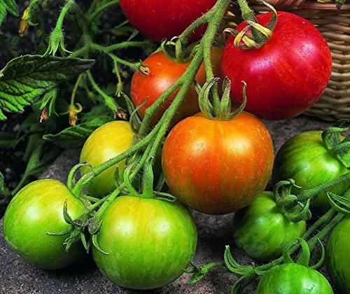 Just Seed Gemüse Tigerella-Tomaten, 10 g Samen Bulk Pack