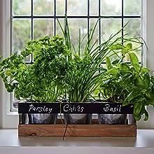 Jardín de Hierbas Interior de Viridescent - Caja de madera jardinera para alfeizar de cocina - El kit contiene todo lo que necesita para cultivar sus propias hierbas frescas. El regalo perfecto. ¡Cómprelo hoy de oferta!