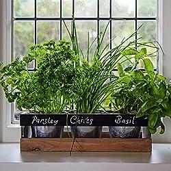kit con todo lo necesario para cultivar sus propias hierbas frescas