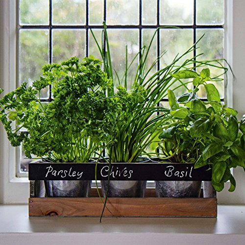 Indoor Herb Garden Kit - by Viri...