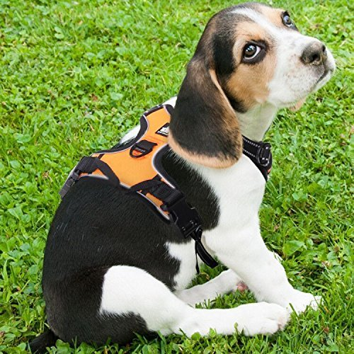 Rabbitgoo Adjustable Refletive Dog Harness Outdoor Pet Vest with Handle Easy Control for Medium Dogs & Durable Material Orange Test
