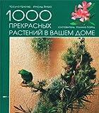 Die schönsten Zimmerpflanzen für ein grünes Zuhause