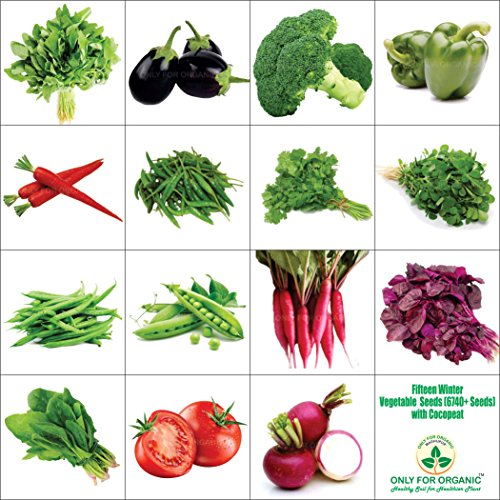 Only For Organic Fifteen Winter Vegetable Seeds(6700+ Seeds)With Cocopeat Block & Instruction Manual 61Wd4nRcTJL