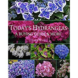 Today's Hydrangeas: A Buying Guide & More