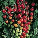 Wildtomate rot - krankheitsresistent - auch für den Kübel oder Hängeampel - 30 Samen
