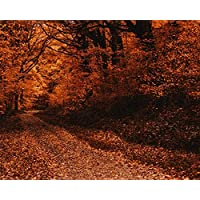 MASHICHEN Painting By Numbers Diy Kit Drawing Forest Path Autumn Gift Kits Pre-Printed Canvas Art Home Decoration Digital Oil Painting-(40X50Cm) With Frame