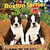Boston Terrier Puppies - Boston Terrier Welpen 2019 - 18-Monatskalender mit freier DogDays-App: Original BrownTrout-Kalender [Mehrsprachig] [Kalender]