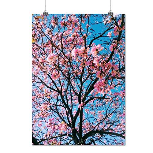 sakura-tree-blossom-pink-nature-matte-glossy-poster-a3-42cm-x-30cm-wellcoda