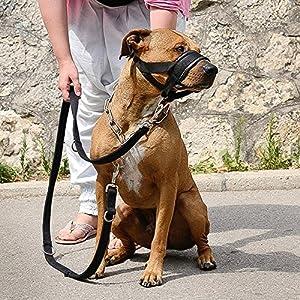 Chien Museau Dog Friendly Formation Museau Facile à Ajuster pour Chiens Réglable Pet Chien Bouche Bouche Muzzle Anti-mordant Aboiement Confortable Masque Muselière