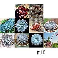 Ncient 1 Paquete de 100 Semillas de Jardín de Suculentas Semillas Fragantes Flores Plantas de Protección contra la Radiación en Oficina para Interior y Exteriores, 10 Colores