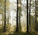 livingdecoration Papel Pintado Bosque 274 x 254 cm Fotomurales Madera árboles luz del Sol Incluyendo Pegamento