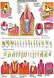 Ruediger Anatomie TA01LAM Gesunde und erkrankte Zähne Tafel, 70 cm x 100 cm, laminiert