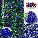 Ultrey Samenshop - Zuckersüss Blaue Erdbeere Samen Früchte und Gemüse Erdbeere Samen Aromatisch Klettern-Erdbeere für Garten Balkon/Terrasse