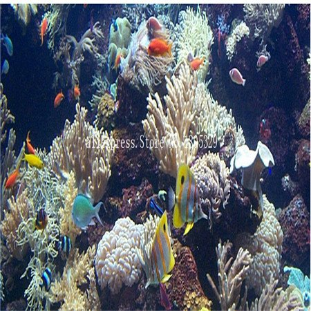 FARMERLY Samen Paket: Seedss Aquarium Aquarium Dekoration s Samen Seedss Samen 100seeds / bag: 5 (Fish Tank Dekorationen Billig)