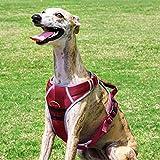 ThinkPet ComfortPro Extra starkes Nylon-Hundegeschirr mit atmungsaktivem Mesh, reflektierendes Gurtzeug mit Verkehrsgriffschutzweste für Outdoor-Walking / Wandern / Reisen für mittlere / große Hundes