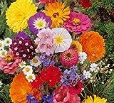 Lot de 50 Graines fleurs en malange a couper jardin colorés fleurs + ou - cornues 40-60 cm semence