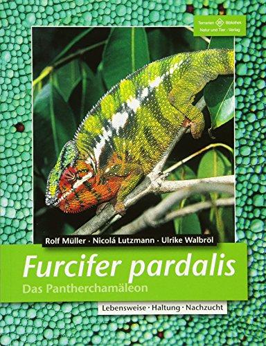 Furcifer pardalis. Das Pantherchamäleon