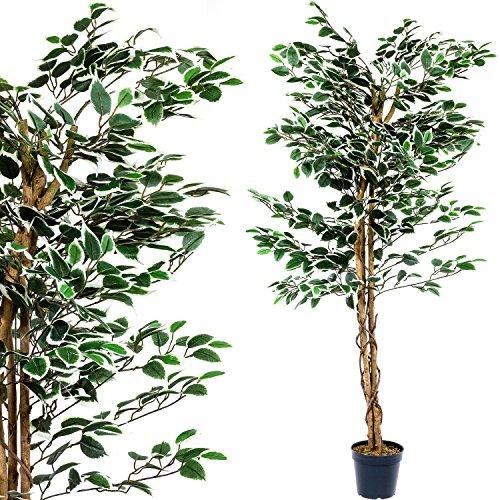 PLANTASIA Ficus-Baum, Echtholzstamm, Kunstbaum, Kunstpflanze - 160 cm, Schadstoffgeprüft