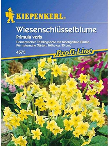 Primula veris Wiesenschlüsselblume