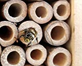 PEARL Insektenhotel-Bausatz, Nistkasten und Schutz für Nützlinge -