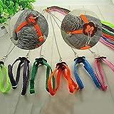 baleba , bissfest, verstellbares Hundegeschirr und Leine, für Vogel Papagei African Greys Kakadu Ara Sittiche Nymphensittiche Sittiche Amazon Medium Large parrit